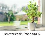 small tree in a window | Shutterstock . vector #256558309