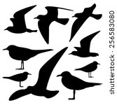 set of sea gull silhouette ... | Shutterstock .eps vector #256583080