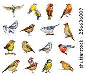 Collection Of Birds. Watercolo...