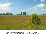 Small photo of Colorful seminatural meadow,sunny day,middle europe,poland