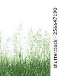 Detailed Abstract Meadow Grass...
