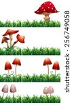 Mushrooms And Grass
