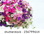 Hanging Basket Overflowing Wit...