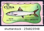 Small photo of CUBA - CIRCA 1971: A stamp printed by CUBA shows the fish MACABI albula vulpes (Linneo)CUBA circa 1971