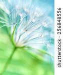 Beautiful Dandelion Background  ...