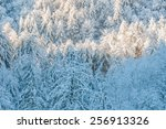snow and ice covered trees... | Shutterstock . vector #256913326