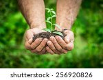 senior man holding young plant...   Shutterstock . vector #256920826