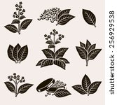Tobacco Leaf Set. Vector
