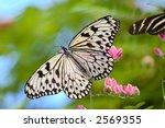 Paper Kite Butterfly  Idea...