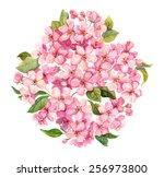 Pink Spring Flowers   Sakura ...
