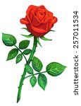Watercolor Red Rose Flower Wit...