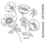 set anemone black   white | Shutterstock .eps vector #257019094