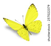 Stock photo yellow butterfly isolated on white background 257022379
