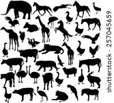 Stock vector set silhouettes animals and birds in the zoo collection vector illustration 257045659