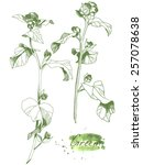 herbs  vector illustration with ... | Shutterstock .eps vector #257078638