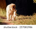 Stock photo dog and cat unusual friends 257081986