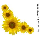 Yellow Sunflowers Isolated On...