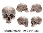 skull model set on isolated...   Shutterstock . vector #257144233