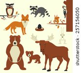 forest animals collection of... | Shutterstock . vector #257156050