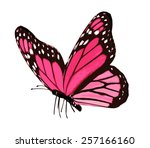 Pink Butterfly   Isolated On...