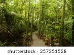 walking trail in tropical forest | Shutterstock . vector #257251528
