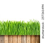 Fresh Green Spring Grass With...
