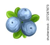 three vector blueberries... | Shutterstock .eps vector #257287873