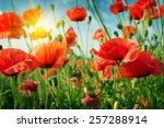 poppies field in rays sun | Shutterstock . vector #257288914