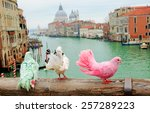 Three Colorful Pigeons On...