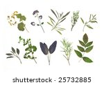 dried pressed herb leaf... | Shutterstock . vector #25732885