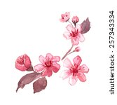 Watercolor Blossom Cherry Tree...