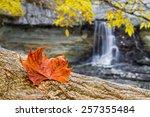 A Reddish Fallen Autumn Leaf...