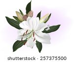 illustration with white lily... | Shutterstock .eps vector #257375500