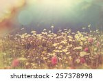 mountains meadow | Shutterstock . vector #257378998