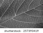 Black And White Leaf Texture