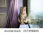Beautiful Cat Sitting On A...