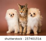 Cat And Puppies  In Studio On A ...