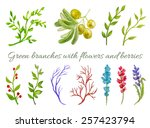 green branches with flowers and ... | Shutterstock .eps vector #257423794