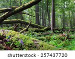 Old Oak Tree Broken Lying And...