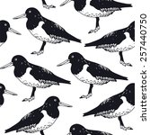 Oyster Catcher Seamless Vector...