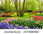 Colorful Spring Tulips And...