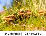 Huddled Mushrooms