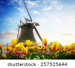 One Dutch Windmill Over Tulip...