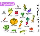 set of vegetables. | Shutterstock .eps vector #257563156