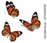 three monarch butterfly ...   Shutterstock . vector #257634430