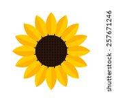 sunflower icon   vector  | Shutterstock .eps vector #257671246