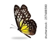 Stock photo beautiful yellow butterfly isolated on white background 257688580