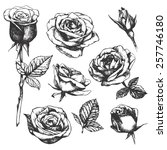 Stock vector set of highly detailed hand drawn roses vector 257746180