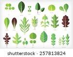 set of salad greens vector.... | Shutterstock .eps vector #257813824