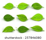 set of realistic green leaves... | Shutterstock .eps vector #257846080